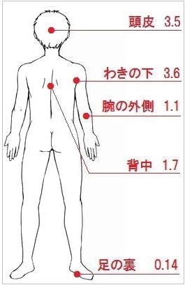 ステロイド軟膏の吸収率(背中側)