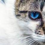 フルメトロン、リンデロン点眼液の効果、副作用、順番【花粉症ステロイド目薬】