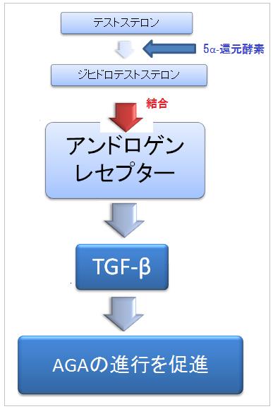 AGAの原因-AGAが進行するフローチャート