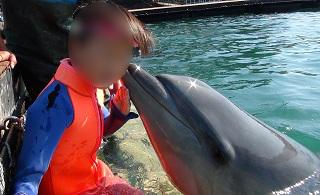 ドルフィンエンカウンター イルカがキス
