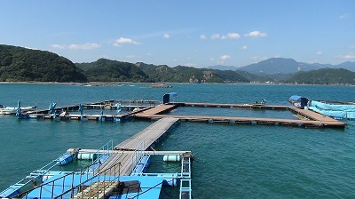 イルカと泳ぐ生簀(和歌山県太地町)