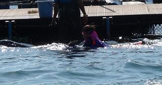 ドルフィンスイム イルカにつかまる少年