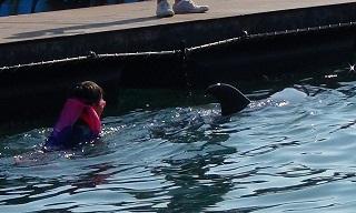 ドルフィンスイム イルカをさがす少年