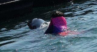 ドルフィンスイム イルカを見つけてつかまる少年