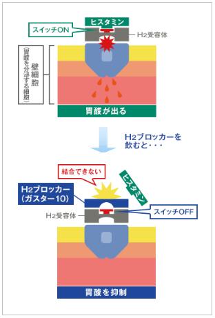 ガスター10の胃酸分泌抑制効果(H2ブロッカー)