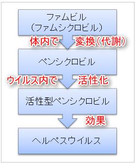 ファムビル(ファムシクロビル)→ペンシクロビル→活性化ペンシクロビル