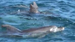 イルカだらけのイルカウォッチング