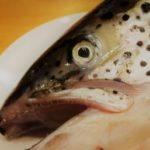 スピール膏(サリチル酸)の使い方 魚の目の芯・タコの取り方