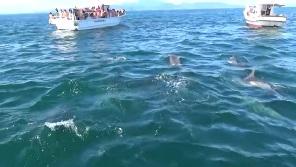 イルカウォッチングに集まる漁船