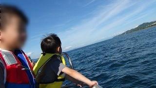 野生イルカに会えるか不安で海を見つめる子供