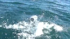 イルカの水しぶき2