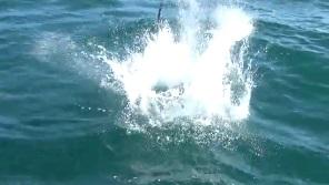 イルカの水しぶき1