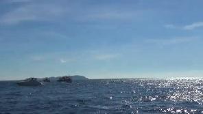 イルカウォッチングに集まる船