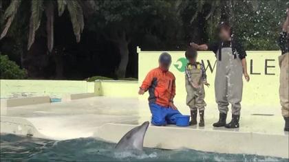 イルカにサイン出し(手のひらを回転)
