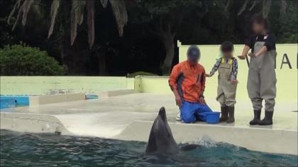 イルカにサイン出し(手を振る)