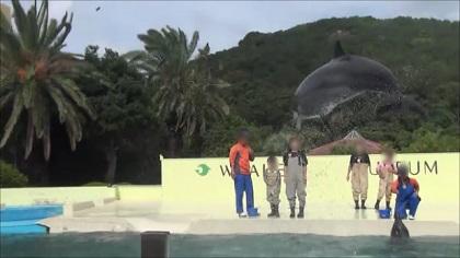 サインを見てジャンプするイルカ